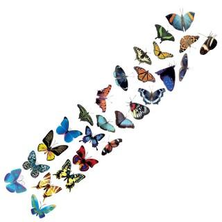 Een meter vlinders - Type A