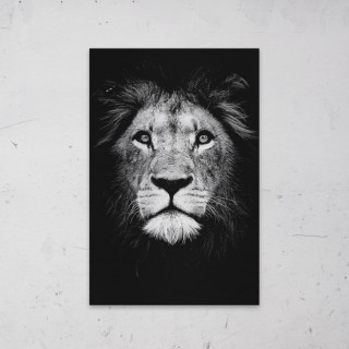 Male Lion King Black and White op Aluminium
