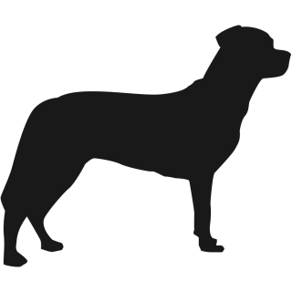 Labrador hond sticker