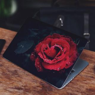 Rode Roos met Blad Laptop Sticker