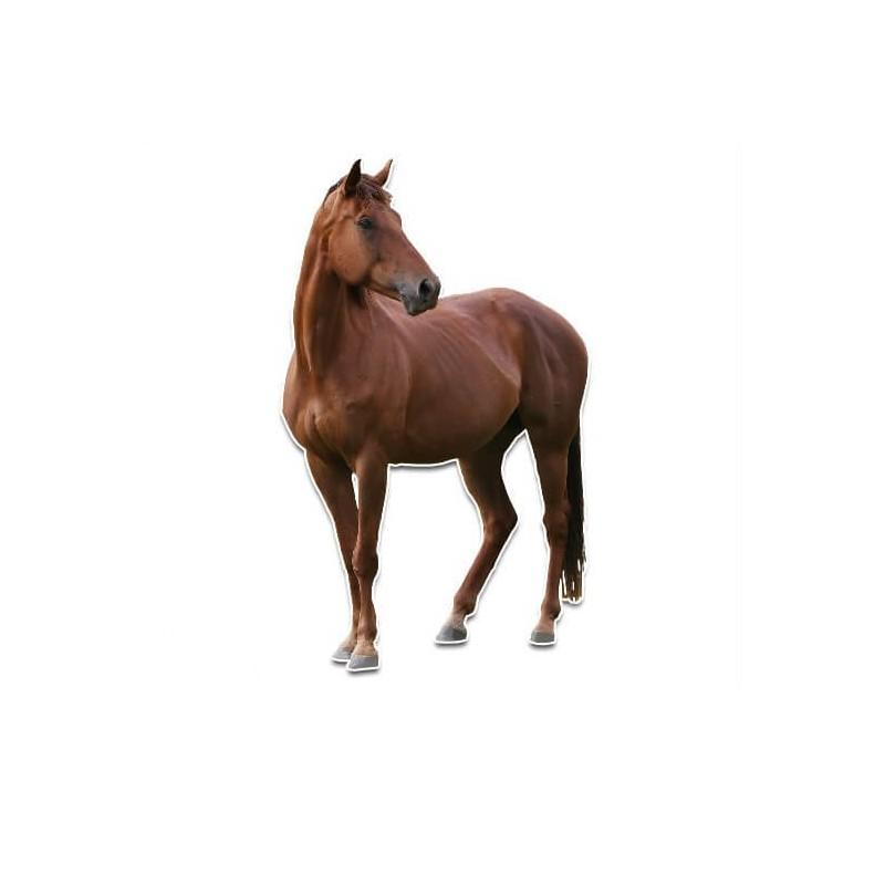 Paarden Sticker Muur.Voorkant Paard Muursticker