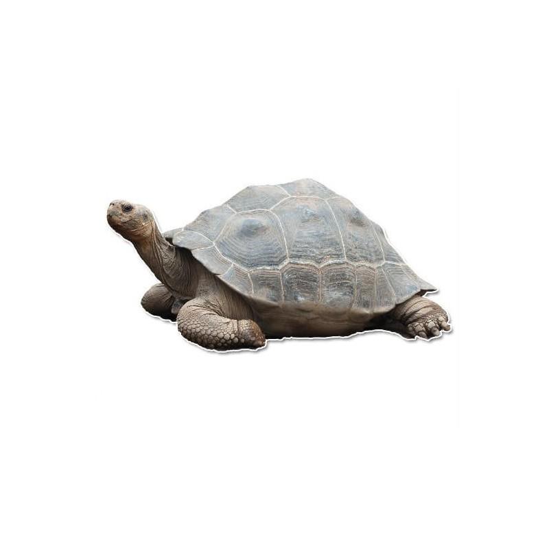Schildpad muursticker