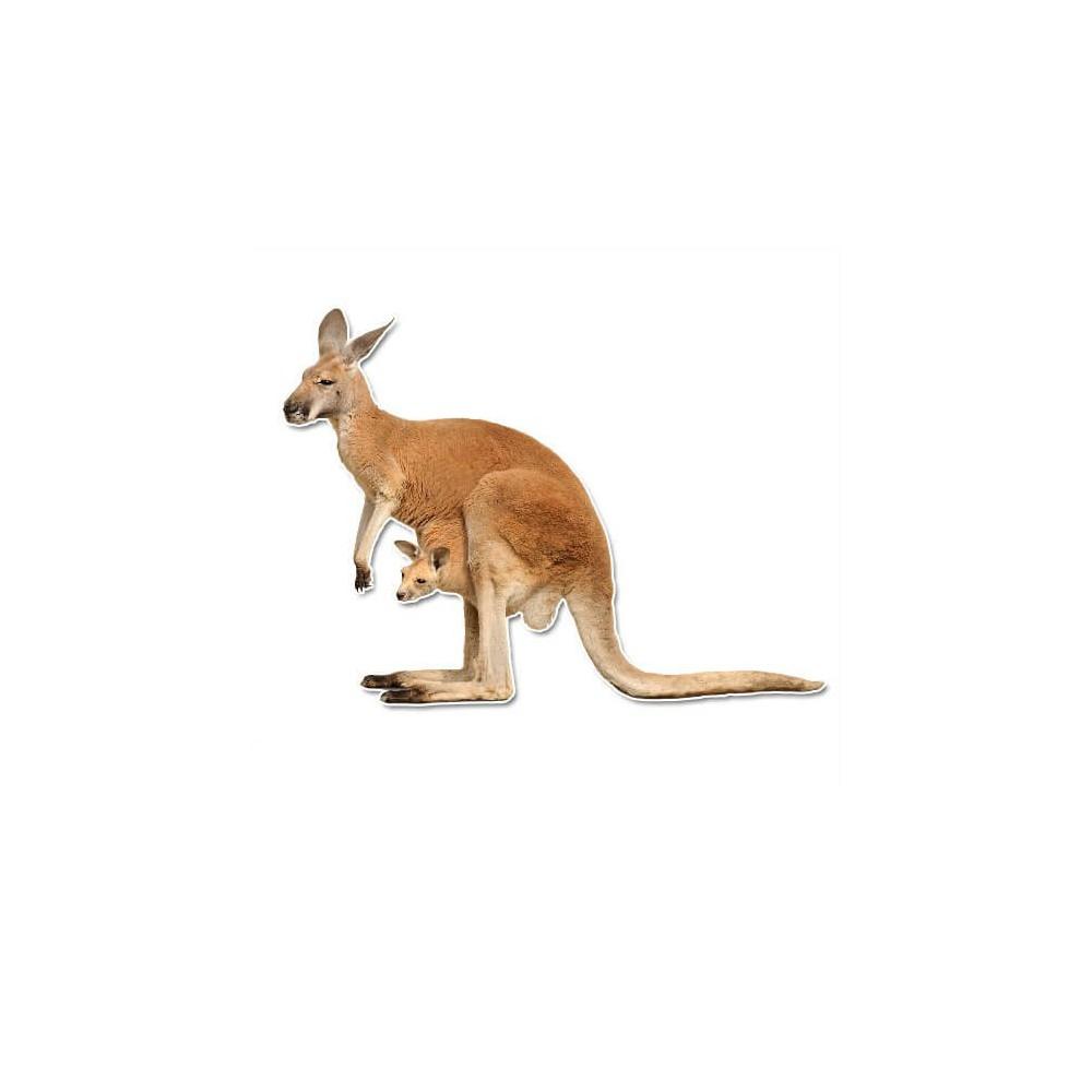 Kangaro muursticker